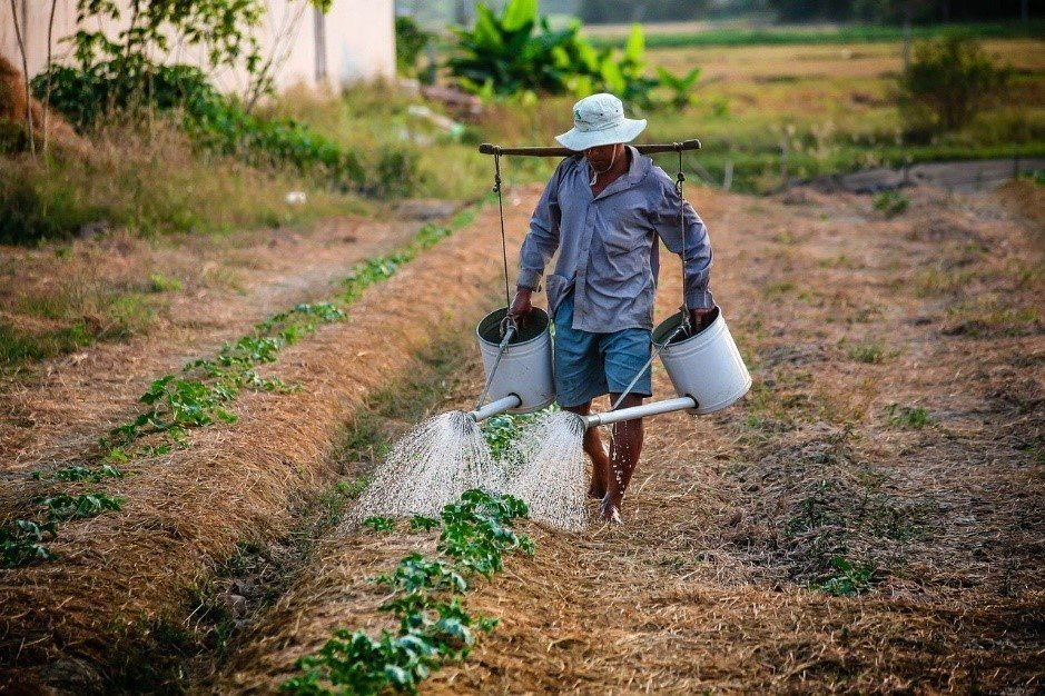 A farmer watering a garden with two watering cans
